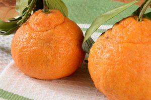 Sumo-Citrus